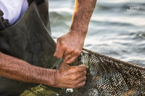 SONIA FATTORI - Io, il pescatore, la laguna 05