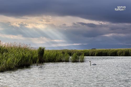 SONIA FATTORI - Io, il pescatore, la laguna 12